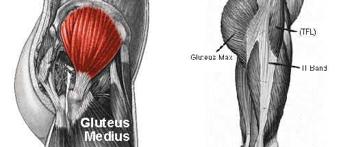 gluteusmedius11